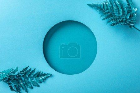 Photo pour Feuilles bleues de fougère près du trou rond sur le papier bleu - image libre de droit