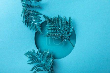 Photo pour Feuilles décoratives bleues de fougère dans le trou rond sur le papier bleu - image libre de droit