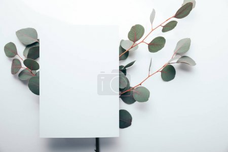 Photo for Top view of eucalyptus branches with empty page on white - Royalty Free Image