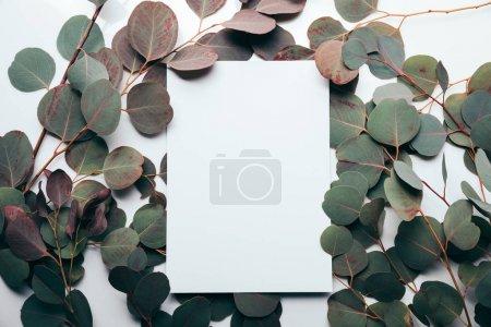 Photo pour Vue du dessus des feuilles d'eucalyptus avec page vide sur blanc - image libre de droit