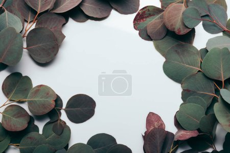 Photo pour Flamme aux feuilles d'eucalyptus vert sur blanc - image libre de droit