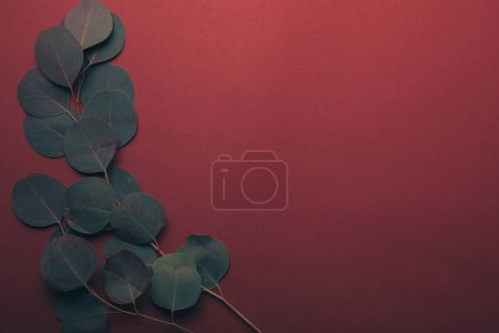 top view of green eucalyptus leaves on red with copy space