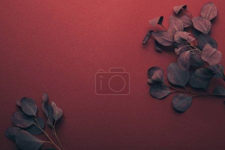 Photo pour Vue de dessus des branches d'eucalyptus sur rouge avec espace de copie - image libre de droit