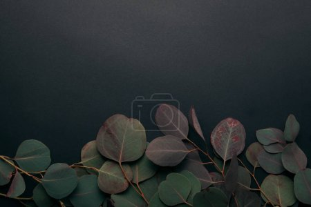 Photo pour Vue de dessus des branches d'eucalyptus sur noir avec espace de copie - image libre de droit