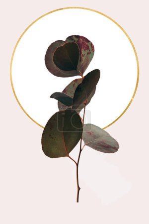 Photo for Floral geometric design with eucalyptus and golden circle isolated on beige - Royalty Free Image