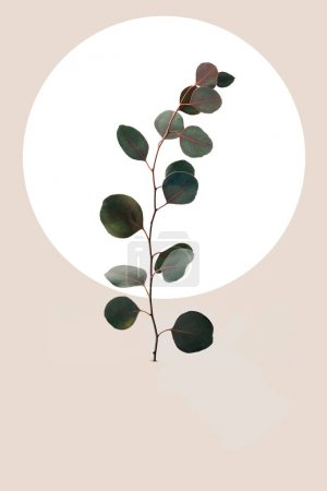 Photo for Floral geometric design with eucalyptus leaves isolated on beige - Royalty Free Image