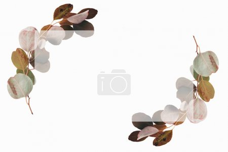 Photo pour Design floral avec feuilles et cadre d'eucalyptus vert - image libre de droit