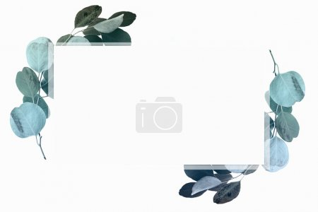 Photo pour Conception florale avec feuilles d'eucalyptus vert et espace de copie - image libre de droit