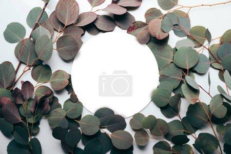 Photo pour Design floral avec branches d'eucalyptus vertes et cadre rond - image libre de droit