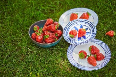 Photo pour Fraises biologiques rouges dans un bol et assiettes sur herbe verte - image libre de droit