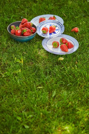 Photo for Red sweet strawberries in bowl and plates on green grass with copy space - Royalty Free Image