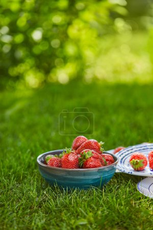 red sweet strawberries in bowl and plates on green grass