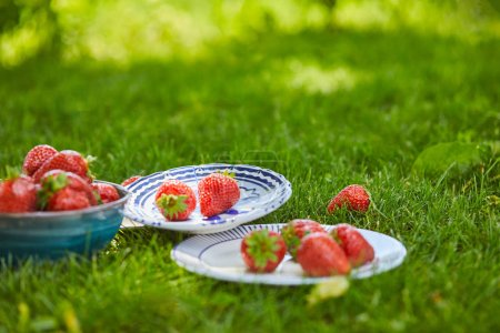 Photo for Fresh sweet strawberries in bowl and plates on green grass - Royalty Free Image
