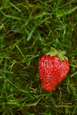 Photo for Close up of fresh red strawberry on green grass - Royalty Free Image