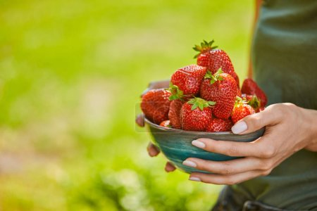 Photo for Cropped view of woman holding bowl full of red strawberries - Royalty Free Image