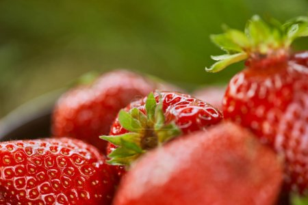 selective focus of raw red strawberries on green grass