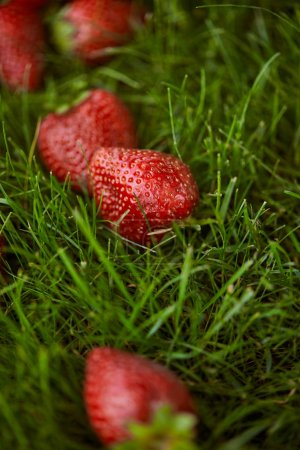 Photo for Close up of fresh red strawberries on green grass - Royalty Free Image