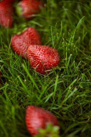 Photo pour Gros plan de fraises rouges fraîches sur herbe verte - image libre de droit