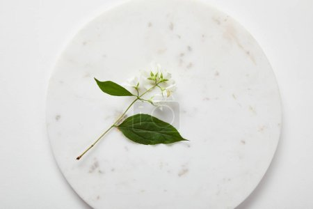 Photo for Top view of plate with jasmine on white surface - Royalty Free Image