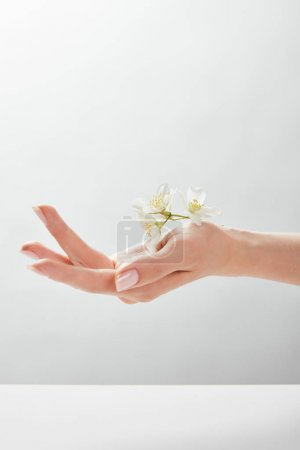 Photo for Cropped view of woman holding jasmine on hand - Royalty Free Image