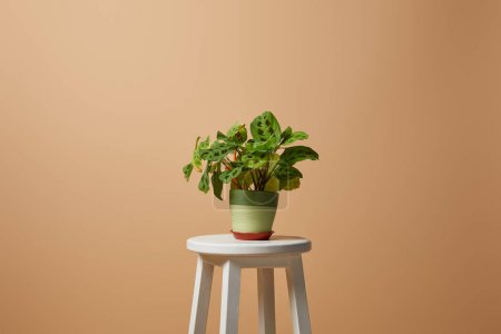 Photo for Flowerpot with plant on bar stool isolated isolated on beige - Royalty Free Image
