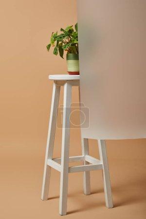 Photo pour Pot de fleurs avec plante sur tabouret de bar derrière verre mat sur beige - image libre de droit