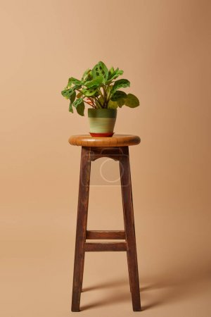 Photo for Flowerpot  with plant on bar wooden stool on beige background - Royalty Free Image
