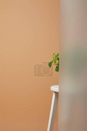 Photo pour Partie de la plante avec des feuilles vertes derrière verre mat sur tabouret blanc isolé sur beige - image libre de droit