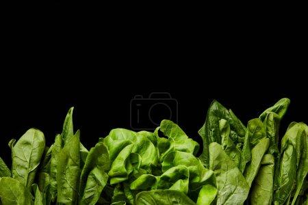 Photo pour Vue supérieure des feuilles vertes fraîches d'épinards d'isolement sur le noir - image libre de droit