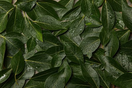top view of wet green leaves background with copy space