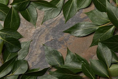 Photo for Green leaves arranged in frame on stone background with copy space - Royalty Free Image