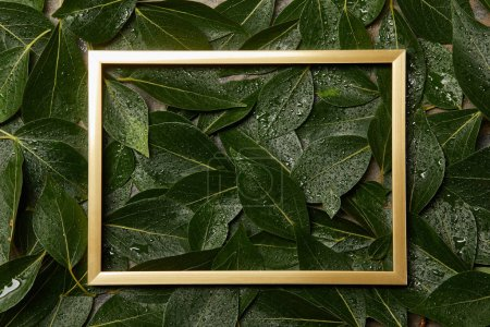 empty golden frame on green wet foliage background with copy space