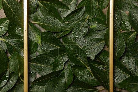 leerer goldener Rahmen auf grün nassem grünen Laubhintergrund mit Kopierraum