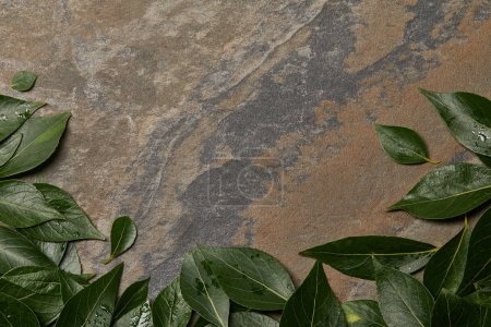 Photo for Green wet foliage on stone background with copy space - Royalty Free Image