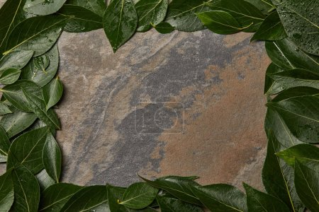 Photo for Top view of green wet leaves frame on stone background with copy space - Royalty Free Image