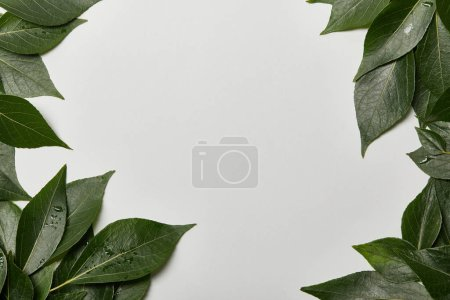 green wet leaves scattered on white background with copy space
