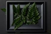 """Постер, картина, фотообои """"верхний вид черной рамы со свежими листьями папоротника на черном фоне"""""""