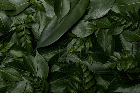 Photo for Green fresh leaves background with copy space - Royalty Free Image