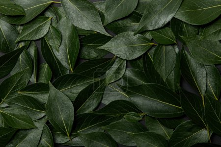 Photo for Green fresh leaves natural background with copy space - Royalty Free Image