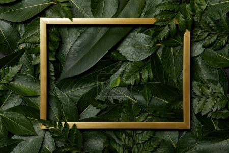 top view of golden frame on green fresh leaves background
