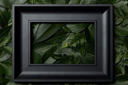 Foto de Vista superior del marco negro sobre hojas verdes de fondo - Imagen libre de derechos