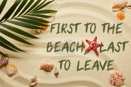 Photo pour Vue supérieure de la feuille verte de palmier près de l'étoile de mer rouge et des coquillages sur la plage sablonneuse avec le premier à la plage, dernier à laisser l'illustration - image libre de droit