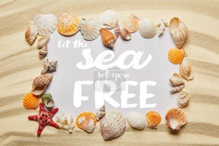 Photo pour Cadre de coquillages autour de laisser la mer vous mettre lettrage gratuit sur la plage de sable - image libre de droit