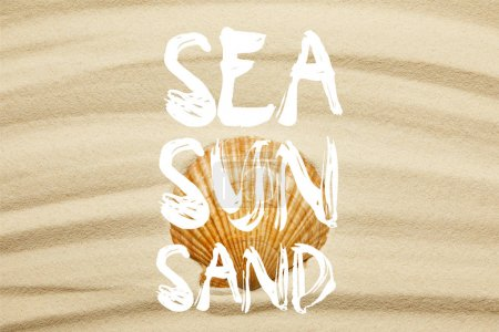 orange seashell on curve sandy beach in summertime with sea, sun and sand words