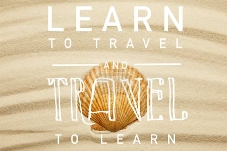 Photo for Orange seashell on curve sandy beach in summertime with learn to travel and travel to learn illustration - Royalty Free Image