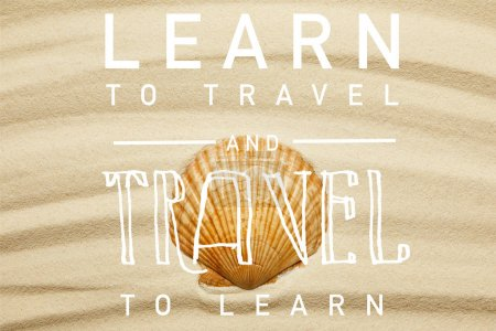 Photo pour Coquillage orange sur la plage de sable courbe en été avec apprendre à voyager et voyager pour apprendre l'illustration - image libre de droit