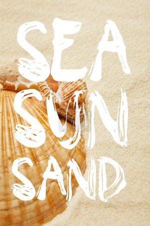 Photo pour Foyer sélectif des coquillages sur la plage avec le sable doré avec l'illustration de mer, de soleil et de sable - image libre de droit