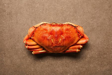 Photo for Top view of uncooked crab with solid shell on textured surface - Royalty Free Image