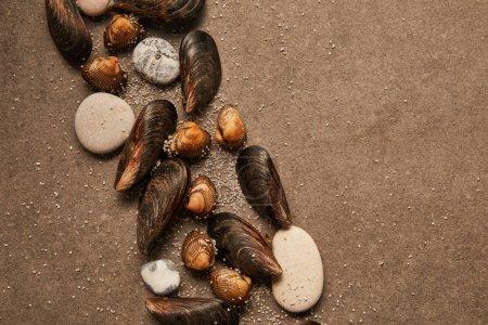 Photo pour Vue du haut des coques et des moules avec du sable et des pierres sur la surface texturée - image libre de droit