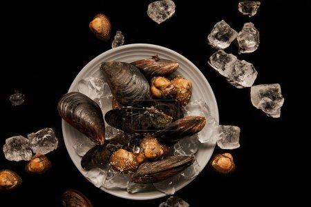 Foto de Vista superior de berberechos y mejillones congelados sin cocinar en placa blanca cerca de cubos de hielo dispersos aislados en negro - Imagen libre de derechos